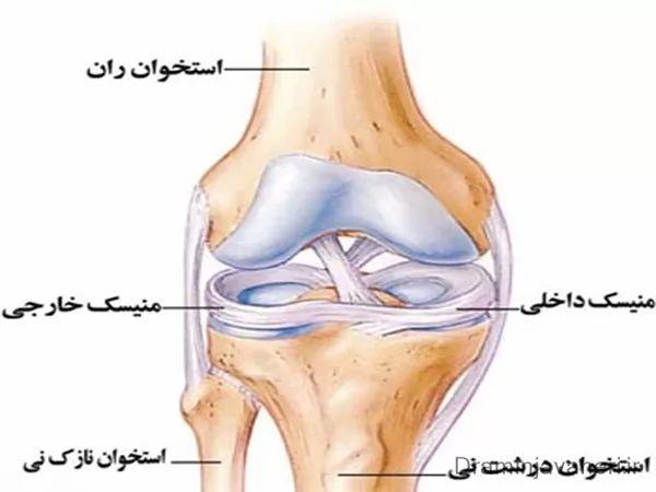 آناتومی مفصل زانو