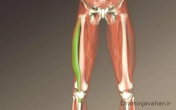 علت درد ران پا به خاطر آسیبب دیدن ماهیچه