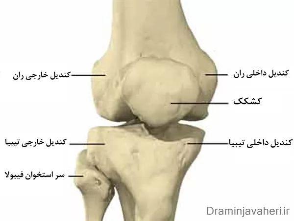 آناتومی استخوان ها و مفاصل زانو